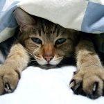 ぼろぼろの枕とはおさらばだ!