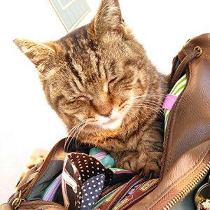 ネコにカバンを乗っ取られる