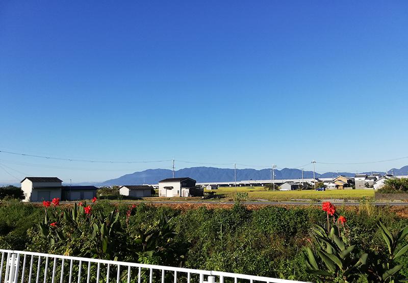 朝の散歩風景